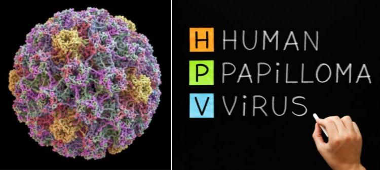papilloma virus humain 2019