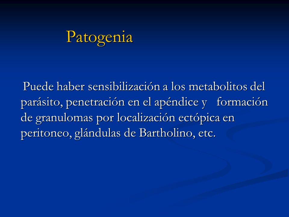 patogenia de enterobiasis