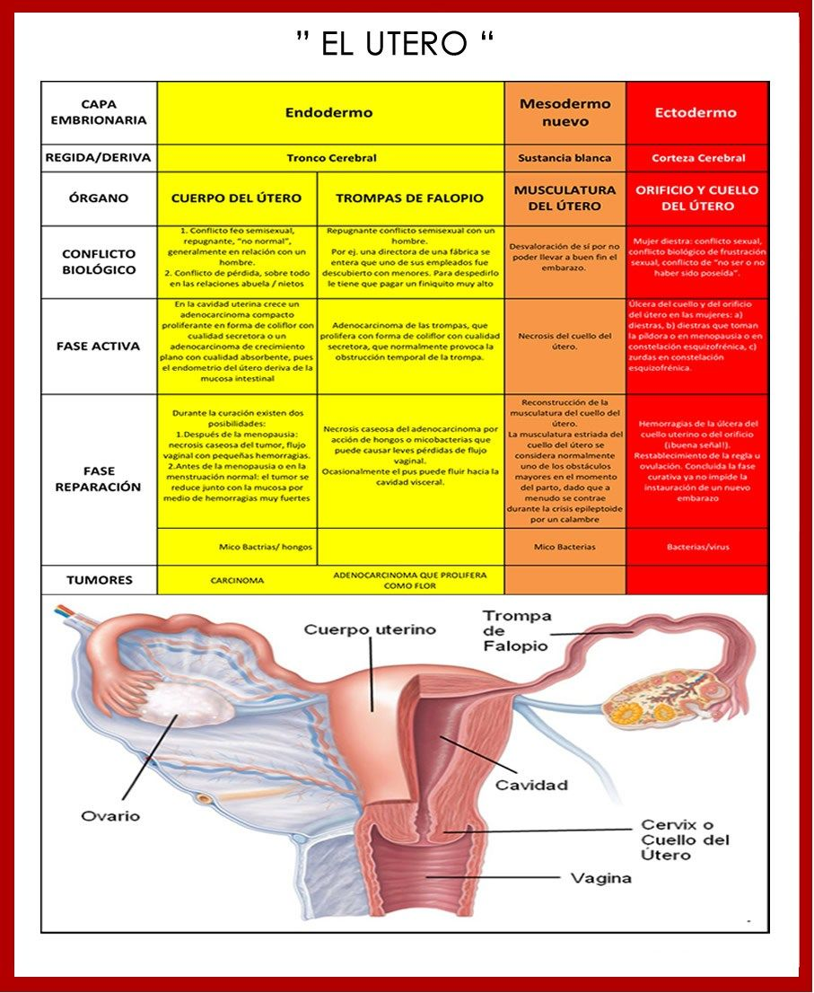endometrial cancer neoadjuvant chemotherapy
