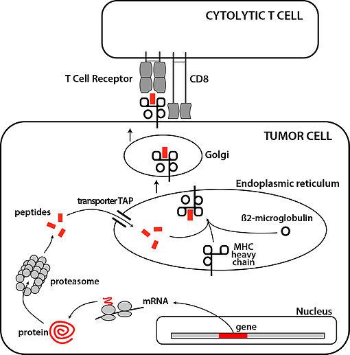 hpv antigen definition cancer genetic disposition