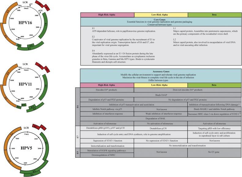 el papiloma virus tratamiento gastric cancer of causes