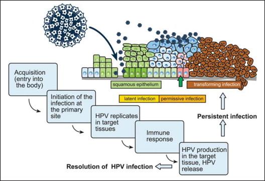 human papillomavirus latency)
