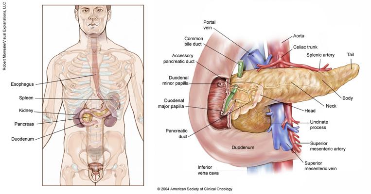 Imagini cu ecografie pancreasului cu cistadenom seros