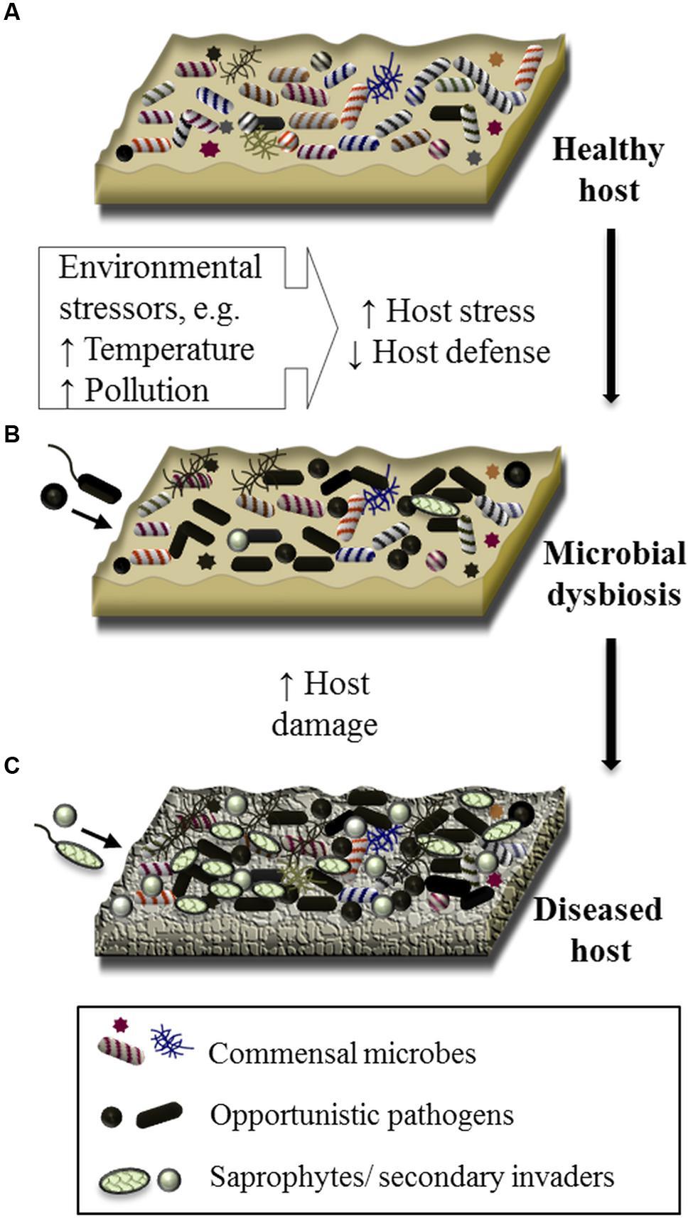 dysbiosis microbiology)