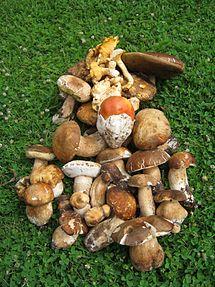 ciuperci galbene