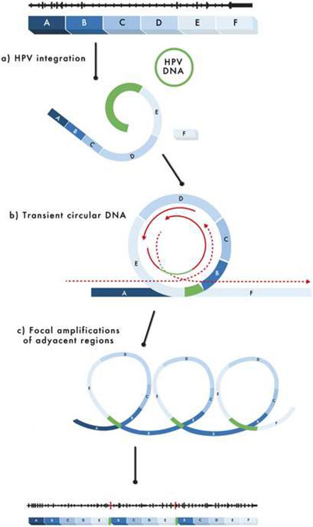 hpv integration cervical cancer)