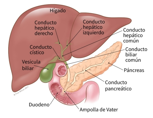 cancer de pancreas pronostico de vida)