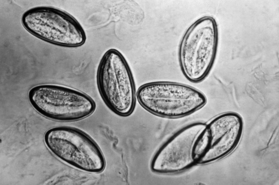 #09 Identificacion de nematodos asspub.ro