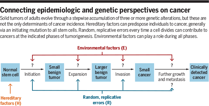 colorectal cancer epidemiology risk factors and protective factors)