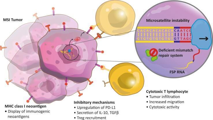 parazity v lidskem tele