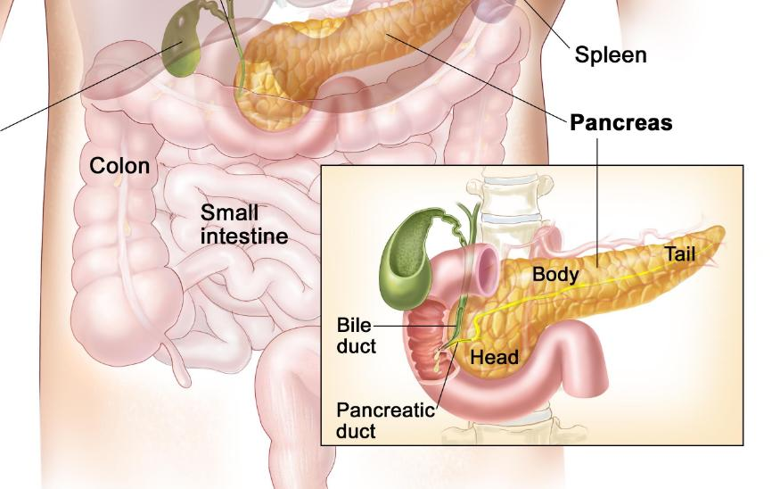 NEUROENDOCRINE TUMORS: CHOOSING APPROPRIATE IMAGING METHODS | The Medical-Surgical Journal