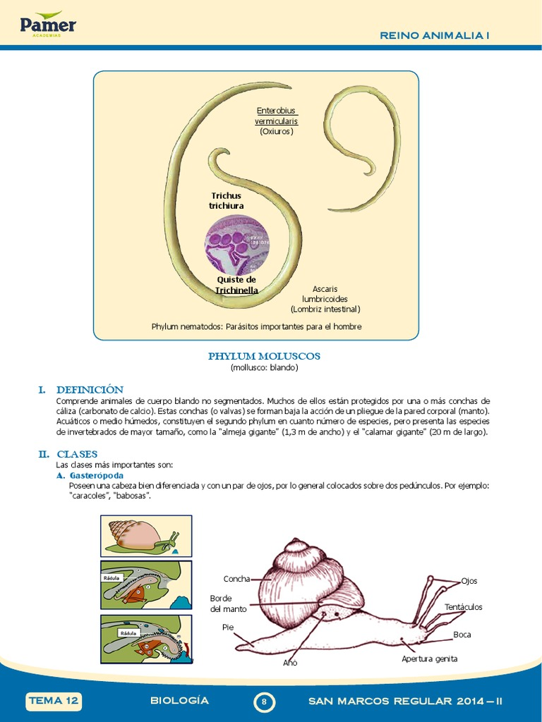 definicion de oxiuros en biologia