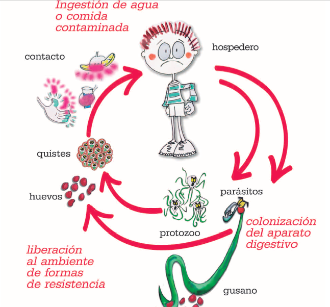oxiuros inflamacion hpv warts time period