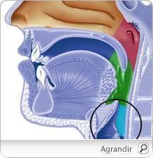 Doppler varice - Ecografia Doppler vasculara