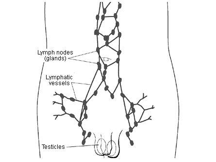 cancer testicular lymph nodes)