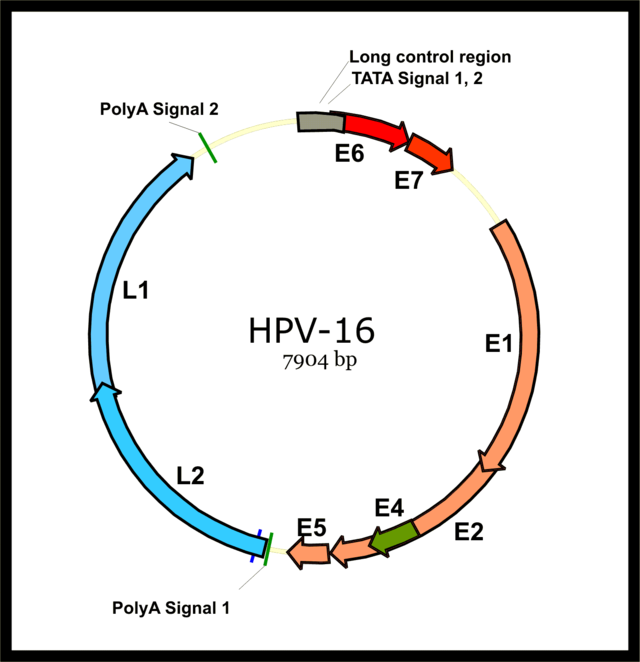 human papillomavirus type 16 treatment
