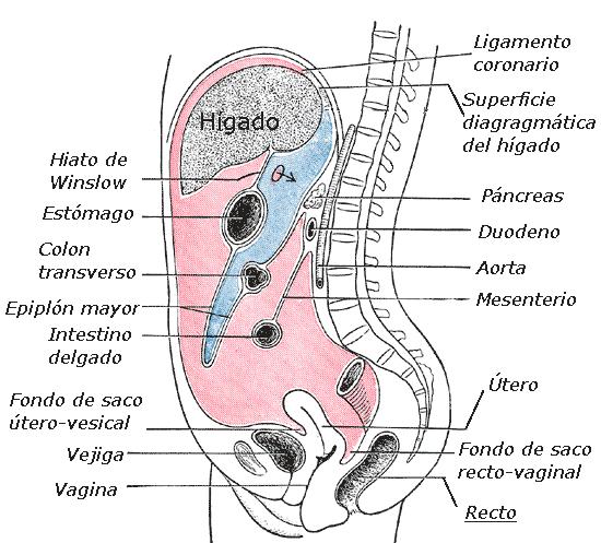 cancer colon bolsa