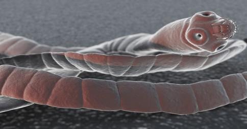 ako zistit parazity v tele