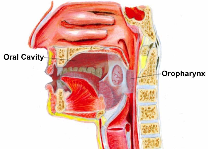oropharyngeal human papillomavirus