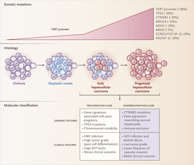 hepatic cancer differentiation)