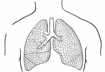 detoxifiere plamani fumatori)