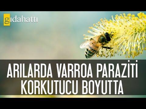 paraziti organisms