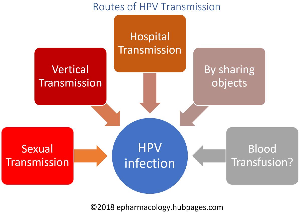 human papillomavirus transmission route)