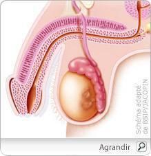 cancer testicule qui consulter