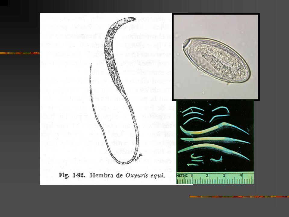 hpv genital no homem que es el virus del papiloma humano