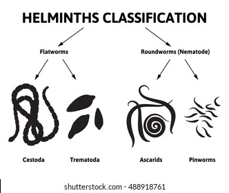 helminth nematode worms)