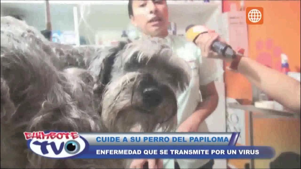 papiloma canino transmite humanos