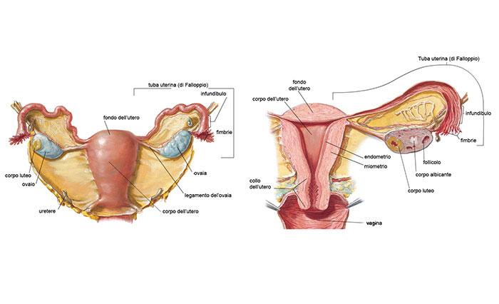 hpv tumore utero