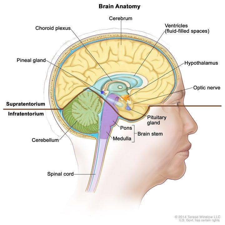 hpv brain tumor