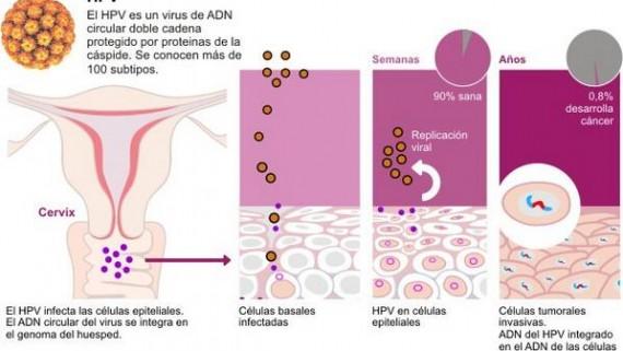 herpes del papiloma humano