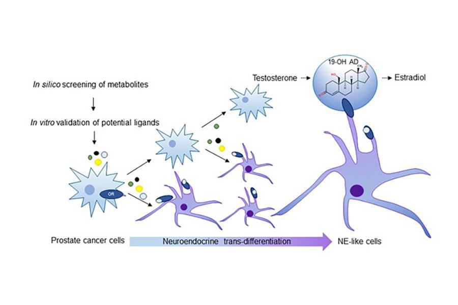 hpv impfung jungen pro und contra cancerul mamar ppt