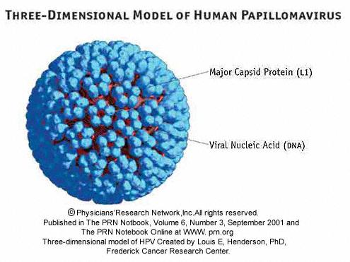 papillomavirus en virus
