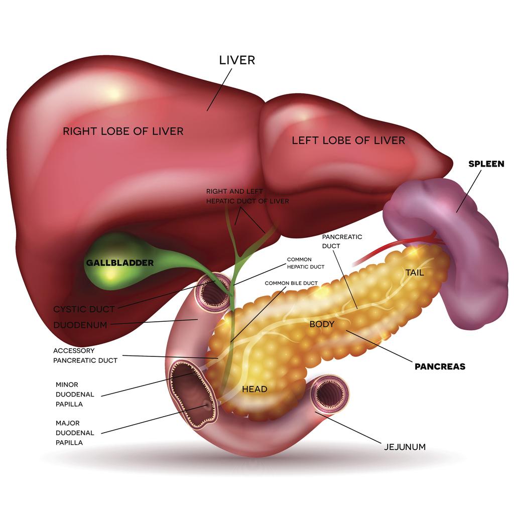 cancer endocrine pancreatic)