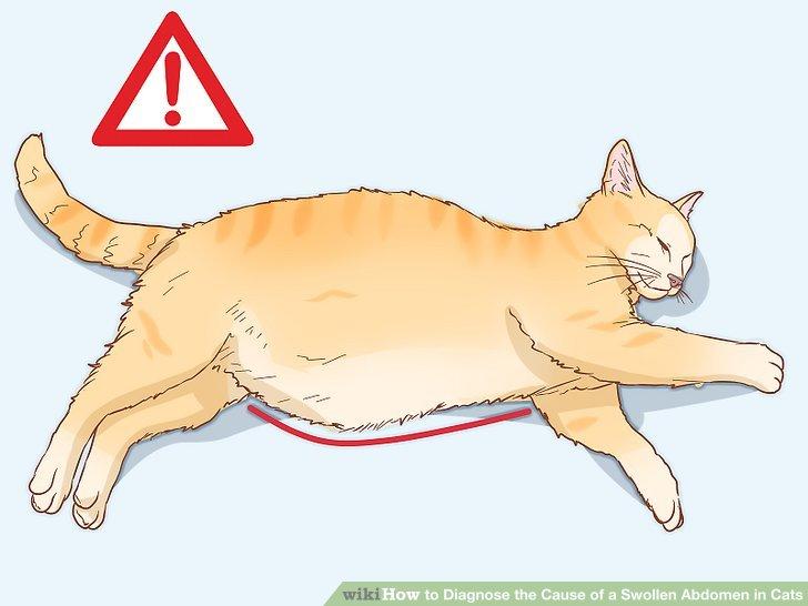 cat cancer abdominal mass