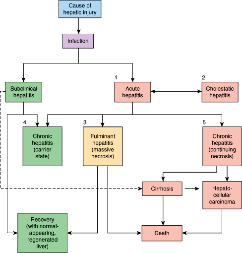 hepatic cancer pathophysiology