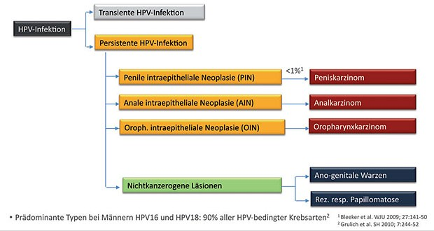 hpv erkrankung manner