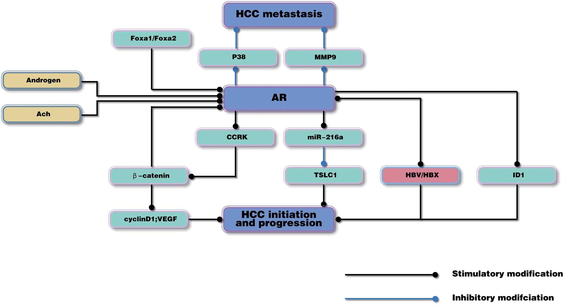 hepatocellular cancer receptor)