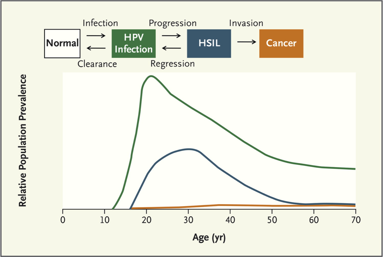 human papillomavirus incubation)