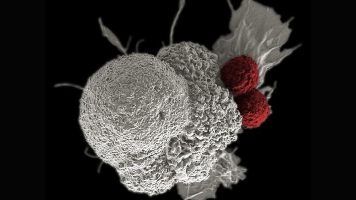 cancer genetic engineering