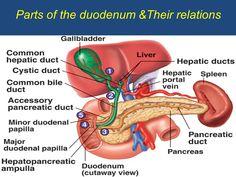 cancer pancreas cauze)