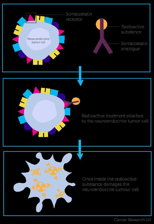 Meeting on rare endocrine diseases Padova