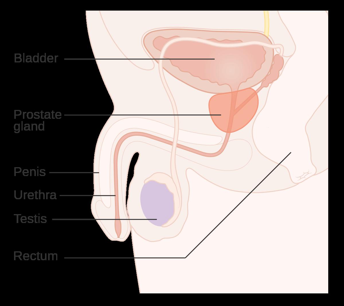 cancer benign de prostata