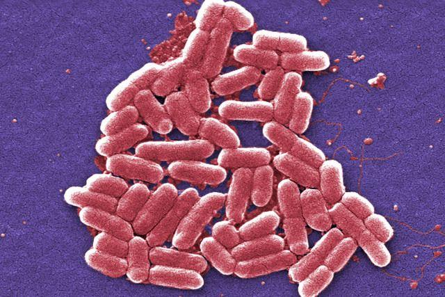 bacterie qui resiste aux antibiotiques)