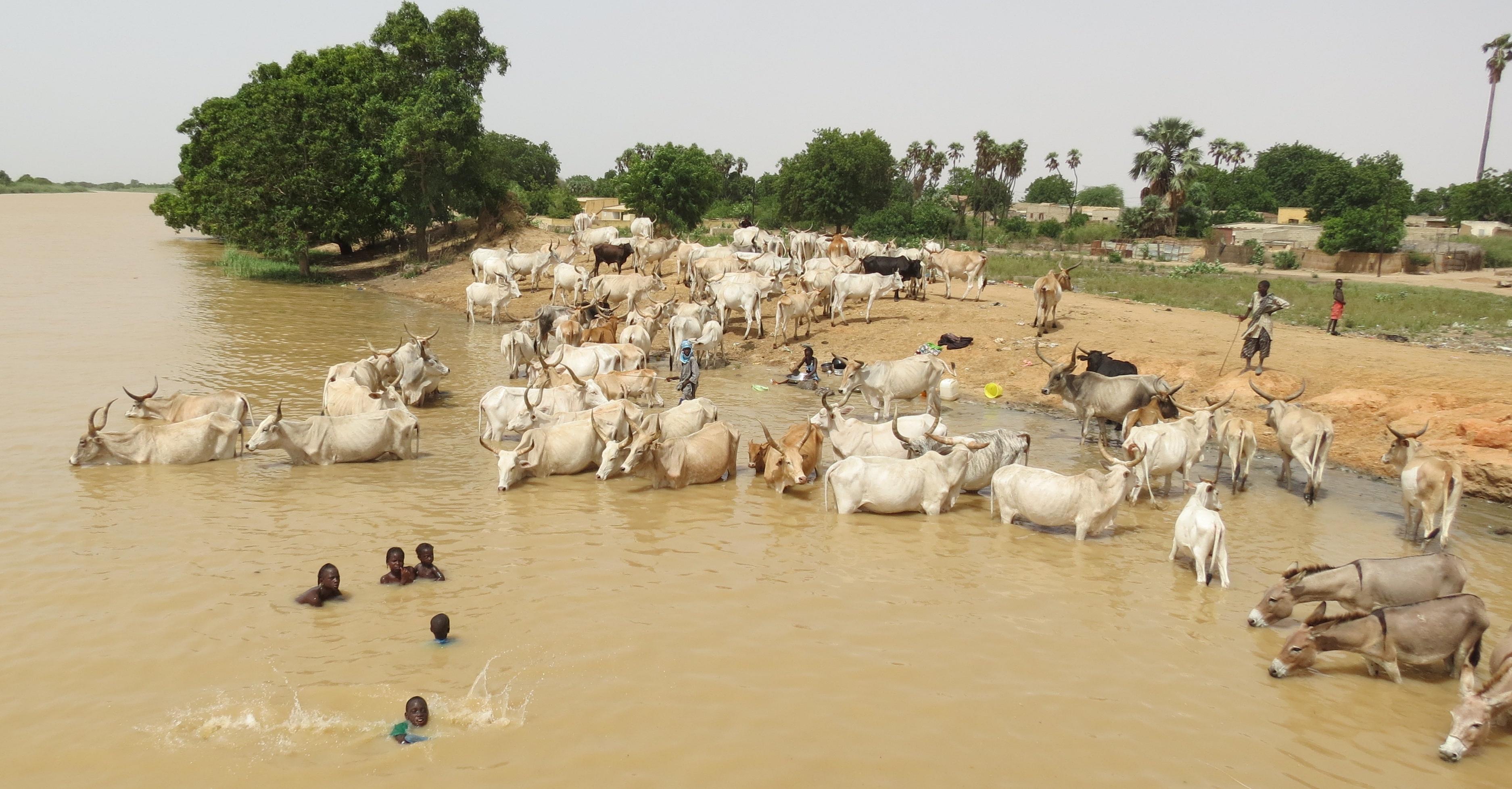 schistosomiasis water