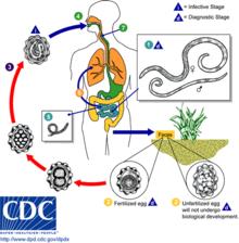 papilloma virus contagio nelluomo