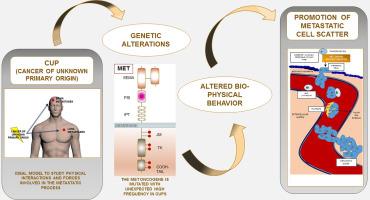 wart virus and babies cervical cancer bone metastasis
